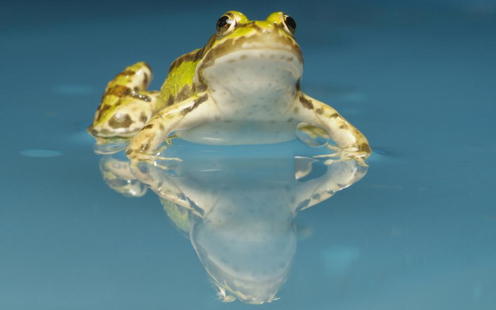 Owning a frog