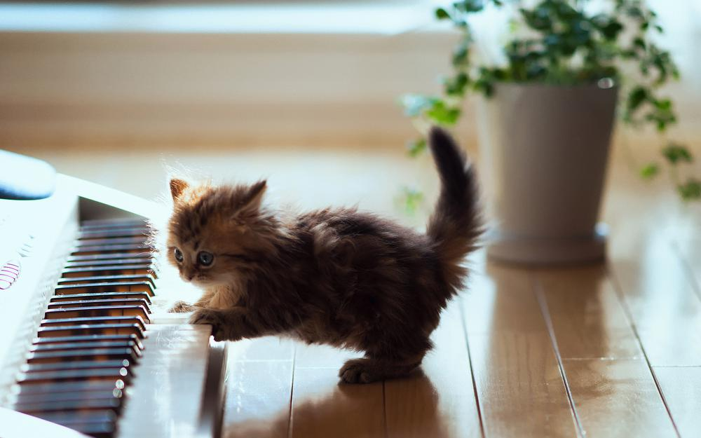 Kitten with synthesizer