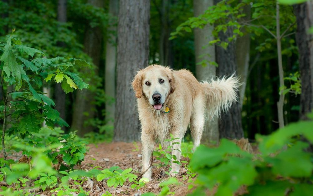 Dog, leaves, trees, grass