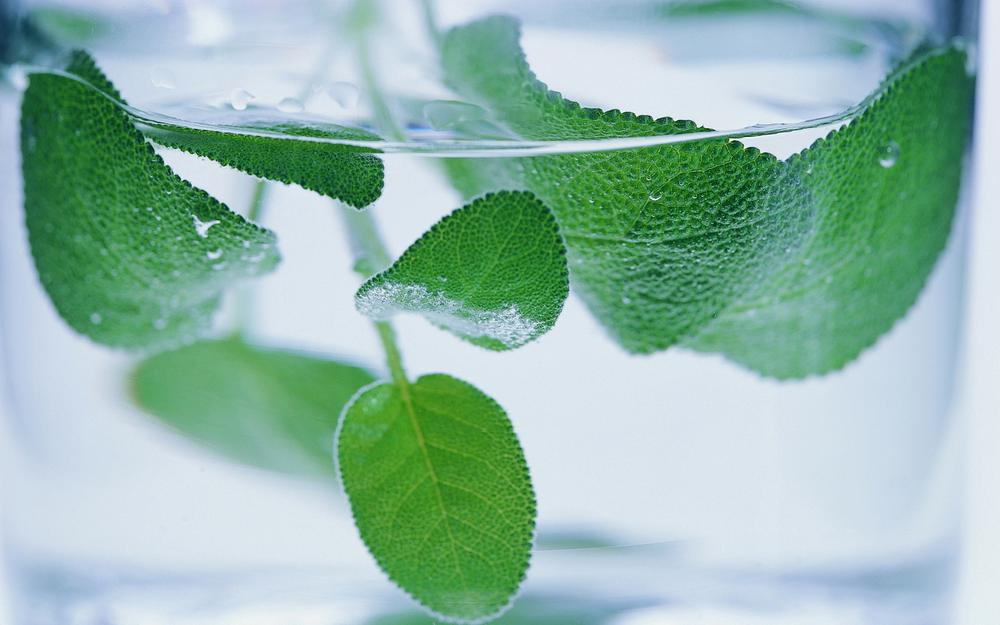 Mint, leaves, water, glass