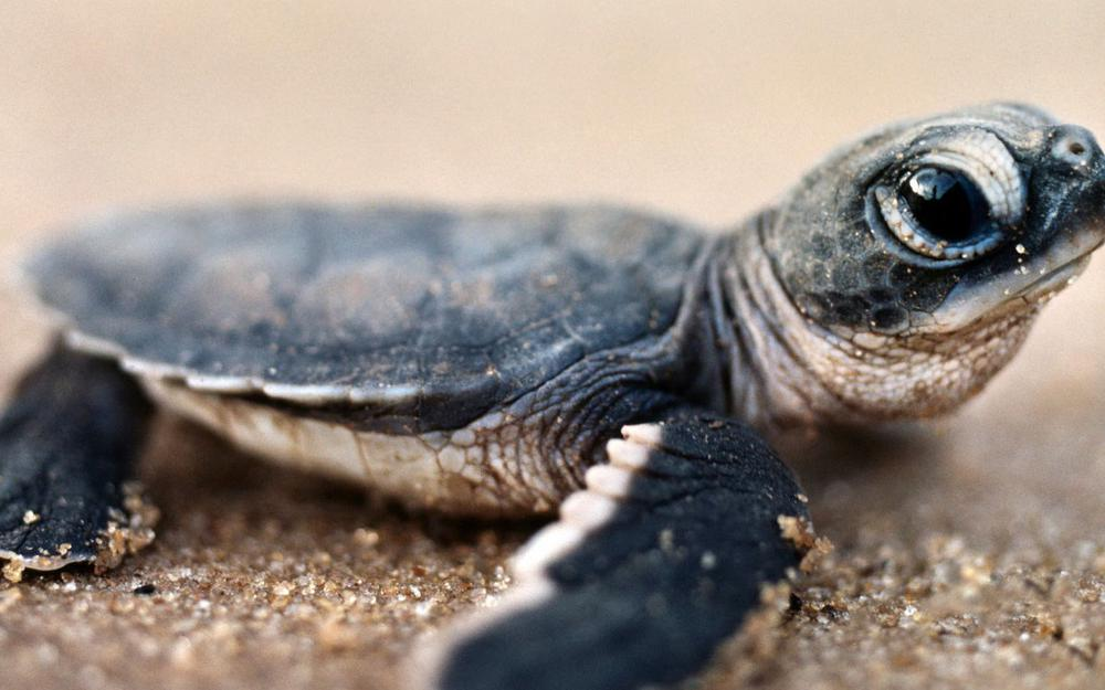 Turtle, small, eyes