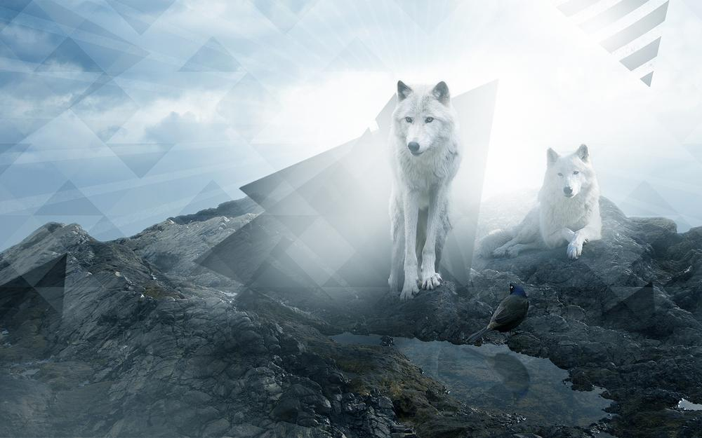 Wolves, couple, family