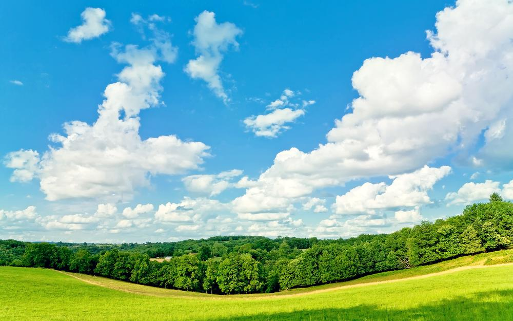 Trees, clouds, summer, grass, sunny, sky
