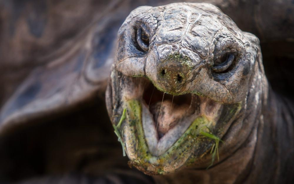 Turtle, mouth, nose