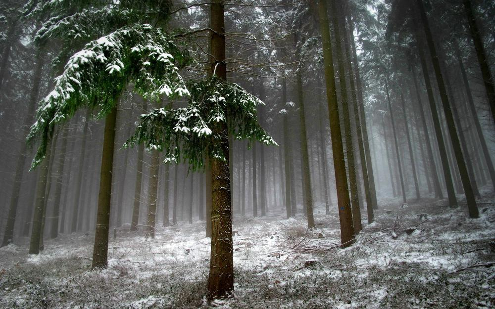 Forest, landscape, snow, trees