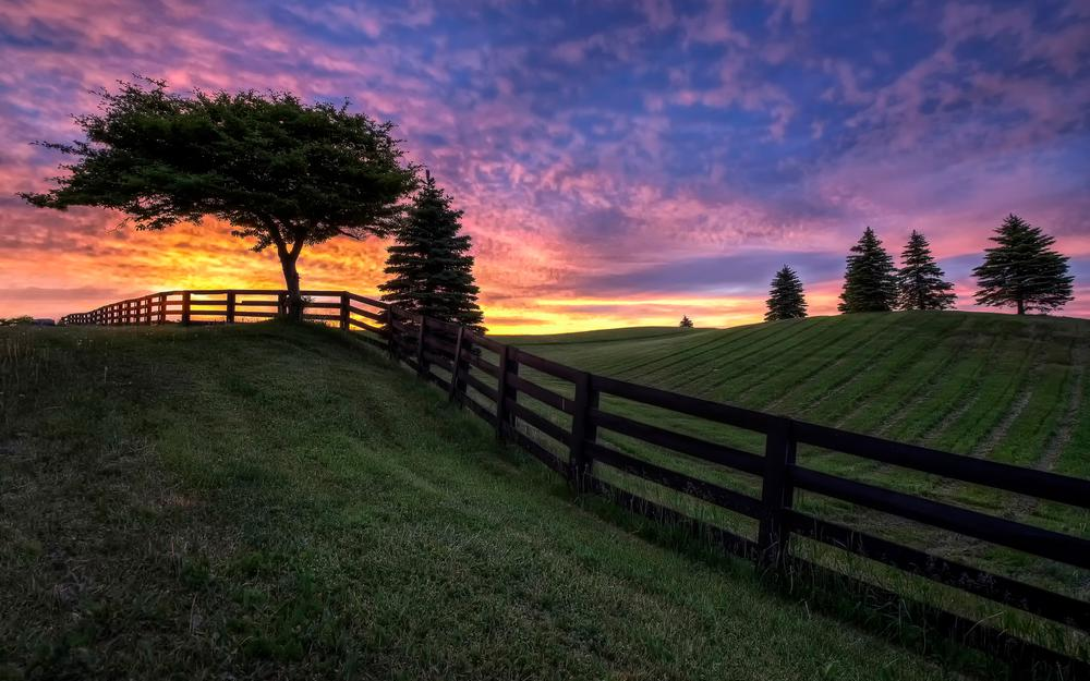 Trees, fence, clouds, field, sky